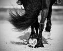 Hoeven in zwartwit