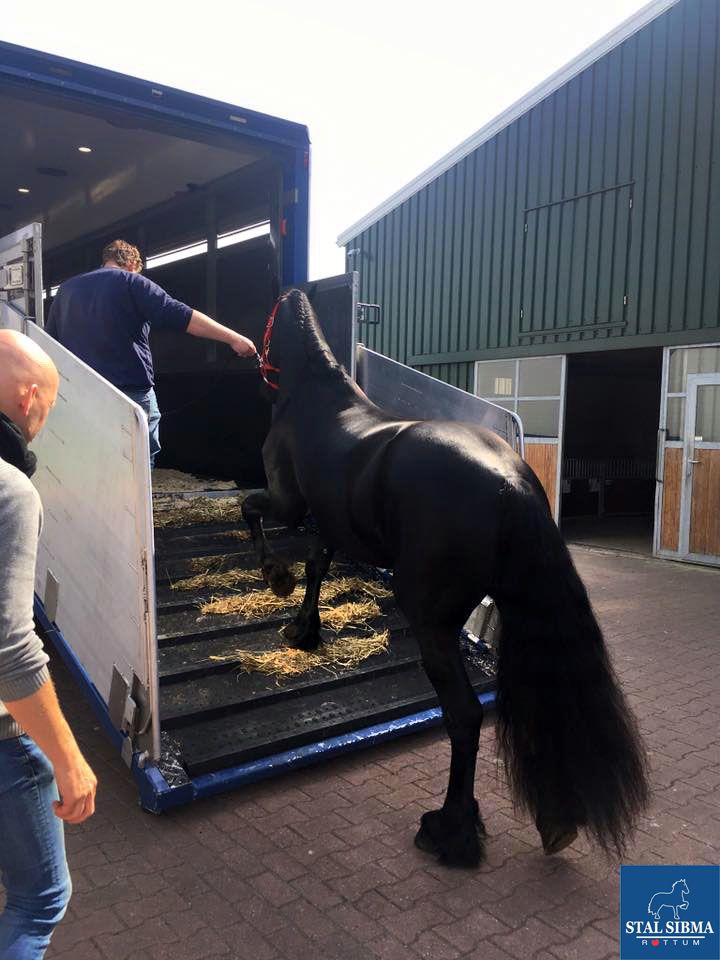 timo stargelding sold piet sibma