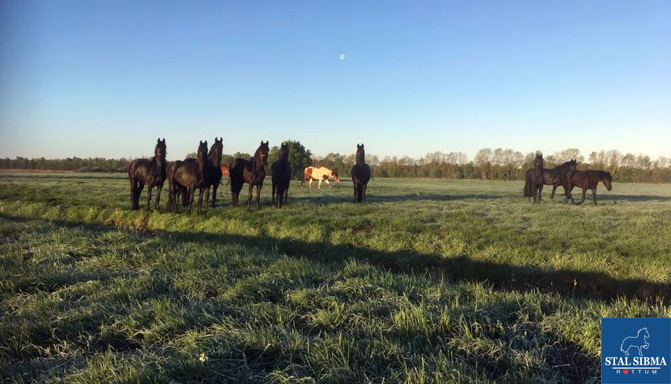 goodmorning horses land stable sibma