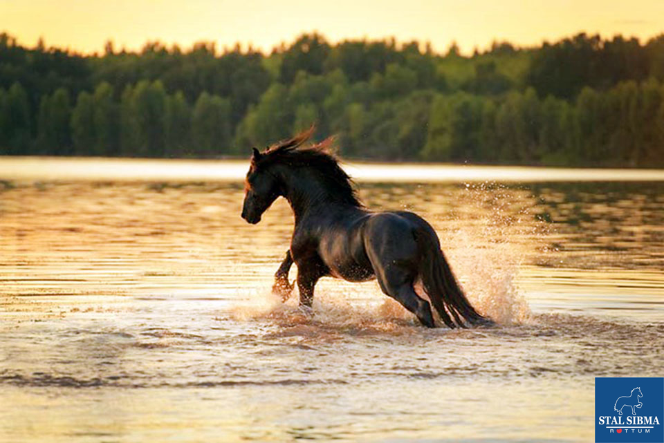 Hitte zomer paarden water stal sibma