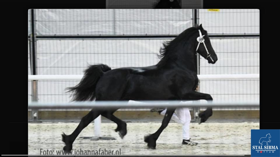 appointed stallion sufficient samen quality