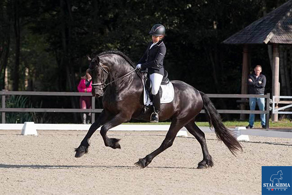 william fan steendans friesian talent cup