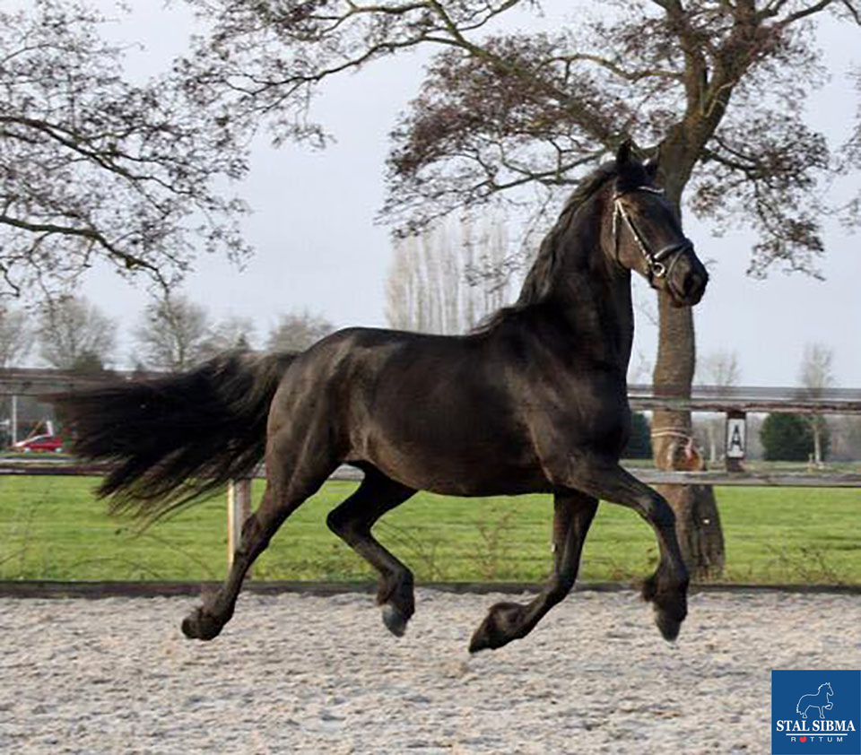 sold sweet mare stal sibma rottum