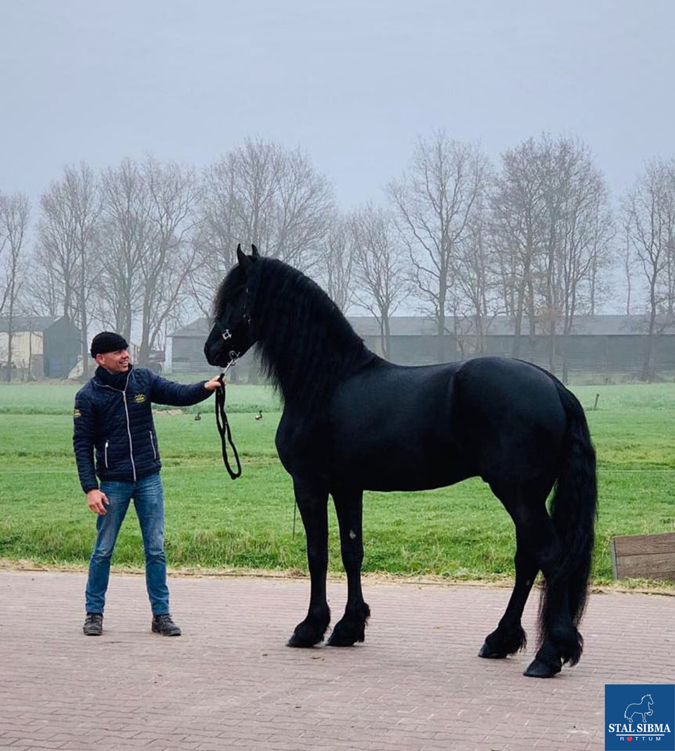 Friesian horses for sale and equestrian centre Sibma - Home