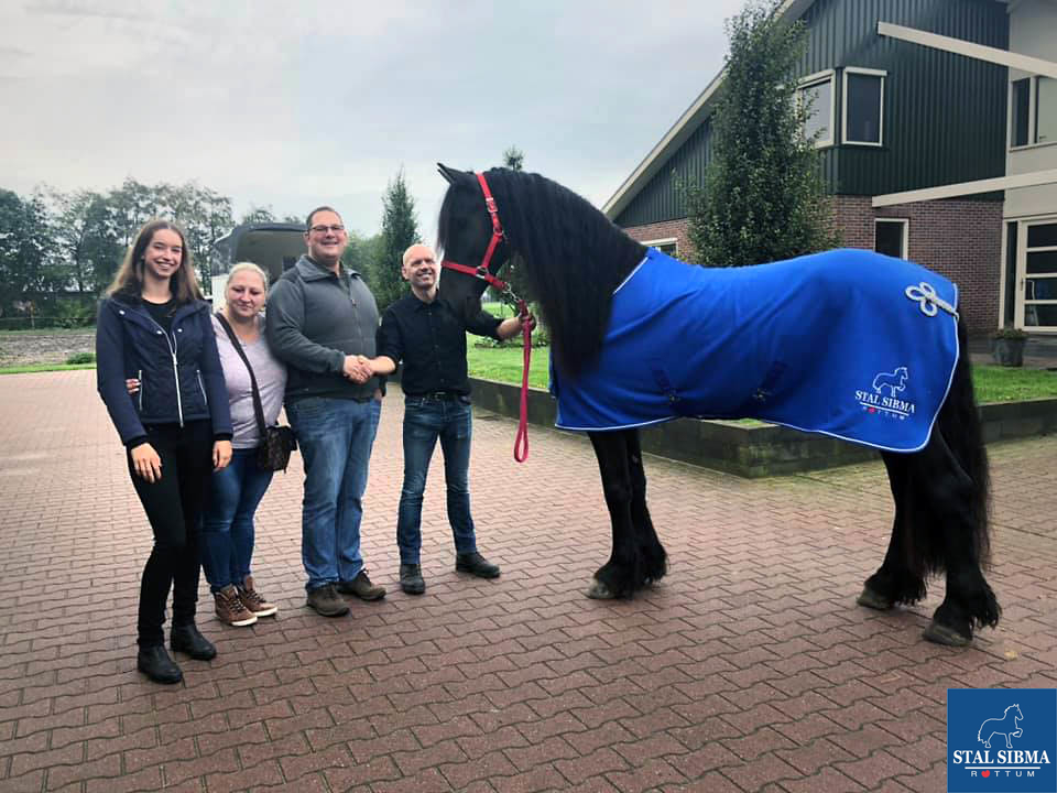 sold friesian hors stal sibma netherlands
