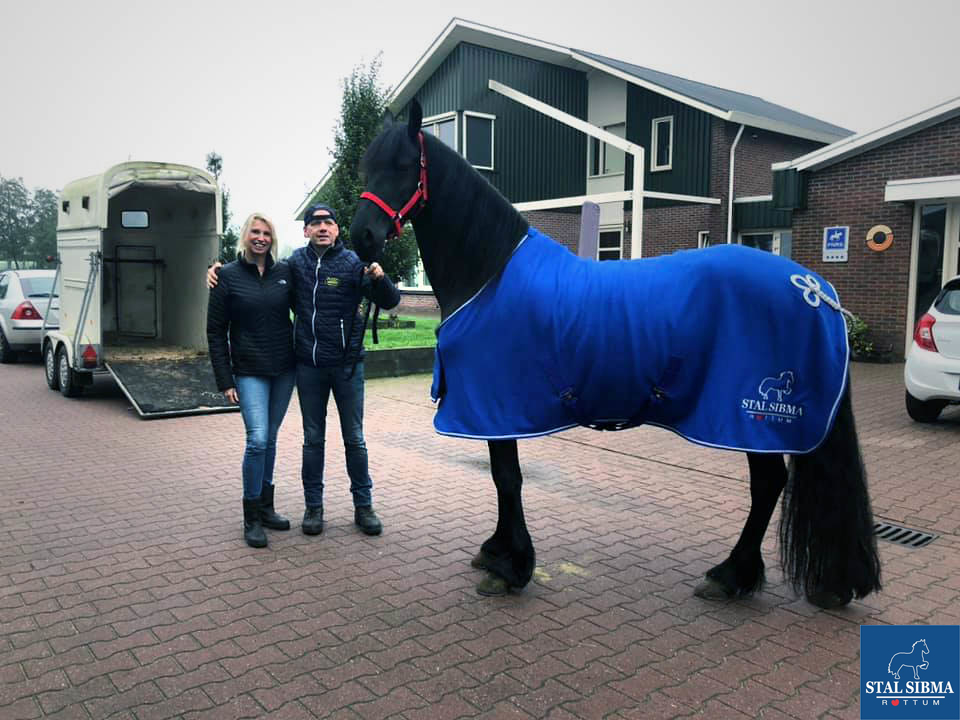 sold top rated friesian stal sibma netherlands
