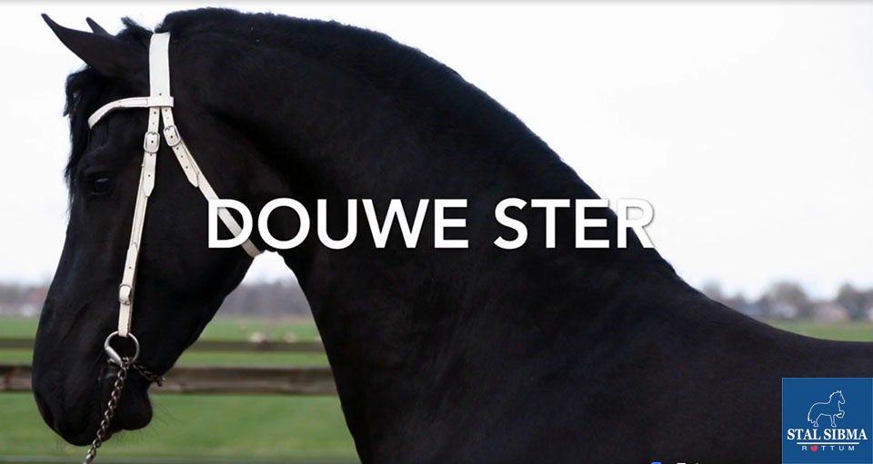 for sale stermare douwe