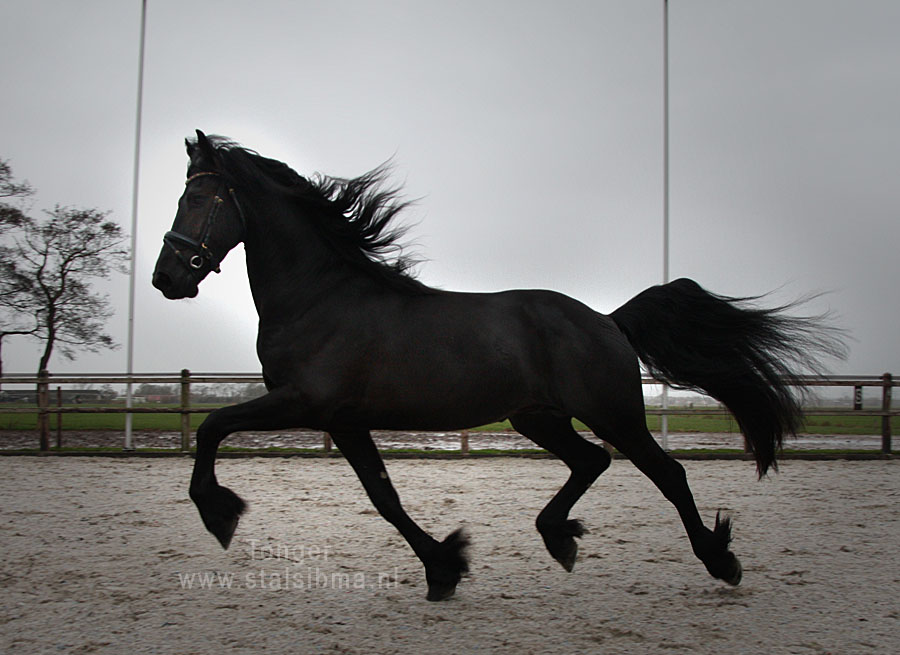 tonger long legged stallion for sale
