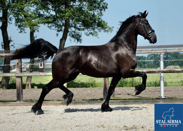 hilde for sale stable sibma netherlands